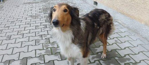 Znaleziono psa w miejscowości Niedrzwica Duża - 29.12.2015