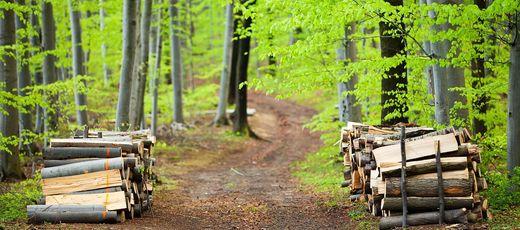 Obwieszczenie Wójta Gminy Niedrzwica Duża o wyłożeniu do publicznego wglądu projektów uproszczonych planów urządzania lasów dla Gminy Niedrzwica Duża