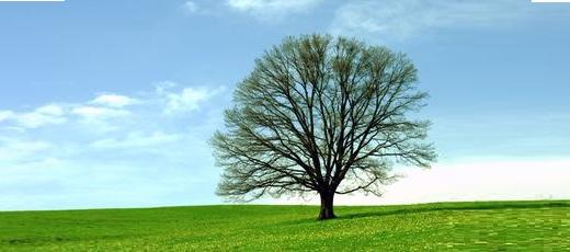 Kolejna zmiana przepisów dotyczących wycinki drzew