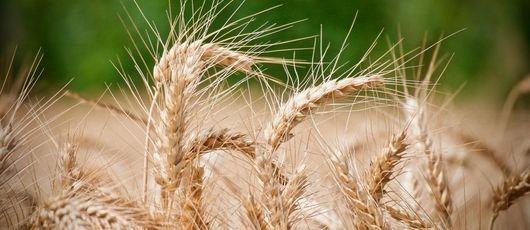 Pomoc dla rolników, którzy ponieśli szkody w gospodarstwach rolnych lub działach specjalnych produkcji rolnej spowodowane wystąpieniem suszy – 2019 r.