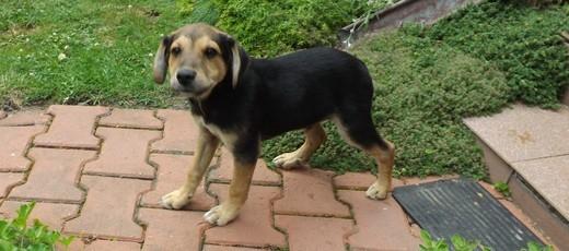 Znaleziono psa w Niedrzwicy Dużej, ul. Sosnowa – 24.07.2019 r.