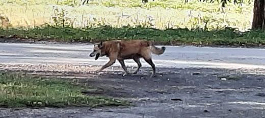 Poszukiwany właściciel psa – Niedrzwica Duża, ul. Krzywa/ul. Górki - 02.08.2019 r.