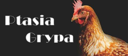 Ptasia grypa na Lubelszczyźnie