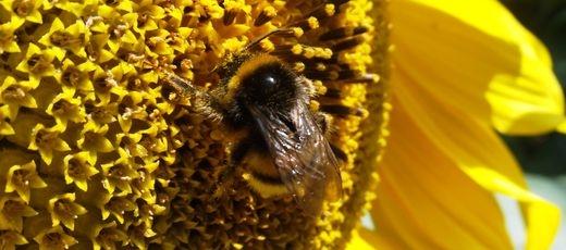 """Kampania ,,Lubelskie - wspólnie dla pszczół""""."""