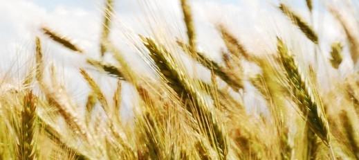 Doradztwo dla rolników - dyżury Ośrodka Doradztwa Rolniczego w Bełżycach